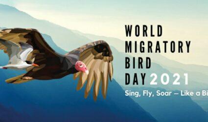 Всесвітній день перелітних птахів