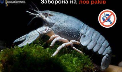 В українських водоймах розпочинається заборона на вилов раків у період їх другої линьки, – Держрибагентство